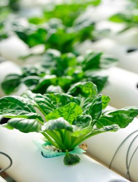 culture hydroponique indoor culture guide de la culture des plantes sans sol l 39 int rieur. Black Bedroom Furniture Sets. Home Design Ideas
